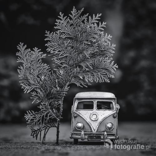 fotografia wykonana przy użyciu modelu auta w skali 1;18 oraz gałązki tui. w późniejszym etapie fotografia została obrobiona w programie graficznym.