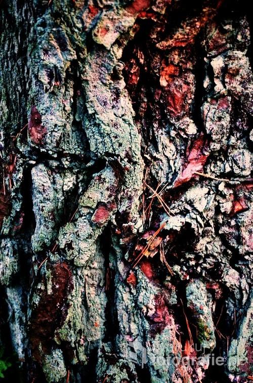 Kora drzewa.