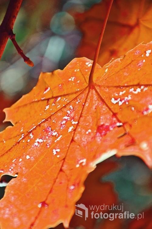 Zbliżenie na kolory jesieni.