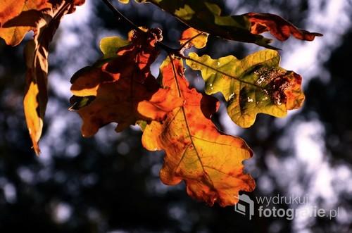 Jesienne liście.