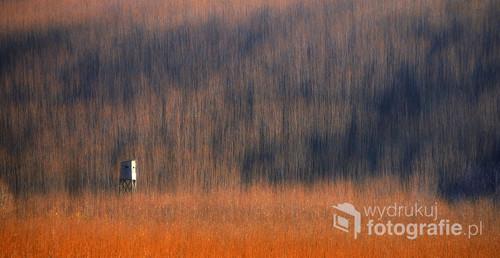 Samotny twór w przestrzeni gęstej wiklinowej wierzby. Plener w Małopolsce.  Fotografia opublikowana na portalu 1x.com