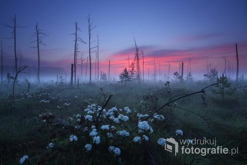 W torfowiskowym rezerwacie przyrody Obary w Puszczy Solskiej. Fotografia na terenie rezerwatu została wykonana zgodnie z obowiązującym prawem.  Praca ta została nagrodzona I miejscem w kategorii Krajobraz w konkursie na Fotografa Roku 2017 ZPFP oraz wyróżniona w konkursie Sztuka Natury (2017). Doczekała się również publikacji w albumie pt.
