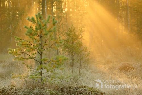 Słoneczny i mroźny październikowy poranek w Puszczy Solskiej.