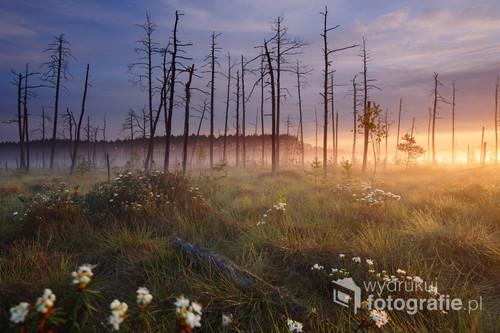 W torfowiskowym rezerwacie przyrody Obary w Puszczy Solskiej. Fotografia na terenie rezerwatu została wykonana zgodnie z obowiązującym prawem.  Fotografia wyróżniona oraz otrzymała nagrodę specjalną w ogólnopolskim konkursie