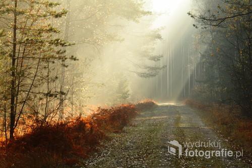 Leśna droga w Puszczy Solskiej