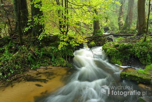 Rezerwat przyrody Czartowe Pole, rzeka Sopot