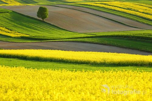 Wiosenne pola na Roztoczu Zachodnim.