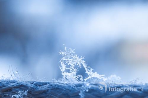 Pierwszy śnieg zawsze powoduje uśmiech na twarzy. Zdjęcie wykonane odwróconym obiektywem 50mm.
