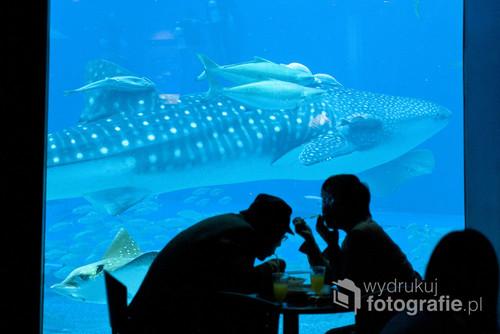 Japonia, Okinawa, 2010  Część nagrodzonego reportażu BZWBK Press Foto 2014 (http://www.bzwbkpressfoto.pl/14/laureaci.php?p=75)