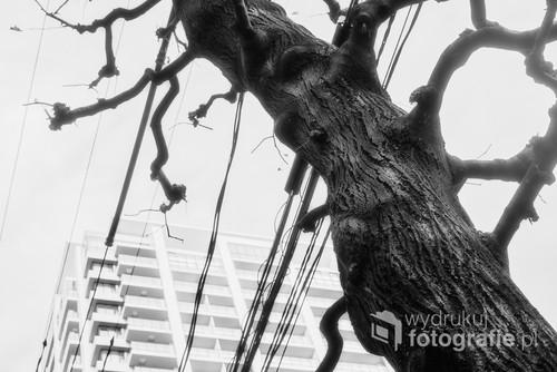 Drzewo. Gdy zabraknie miejsca drzew, czy będzie jeszcze miejsce dla ludzi?  Meguro, Tokyo