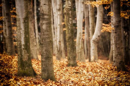 Fotografia wykonana w buczynowym lesie na wzgórzu Czubatka w Kluczach (gm. Klucze, pow. olkuski)