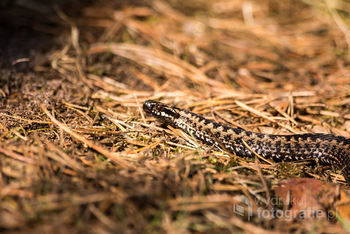 Zdjęcie zostało wykonane podczas pierwszych wiosennych dni na spacerze po lesie. Fotografia została wyróżniona w konkursie fotograficznym