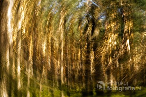 Zdjęcie wykonane podczas eksperymentów z aparatem w ruchu i długim czasem naświetlania.