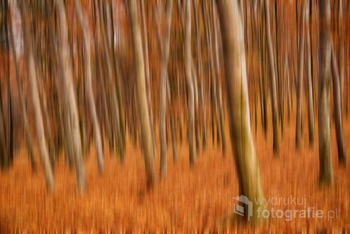 Buczynowy las podczas kreatywnych eksperymentów z aparatem.