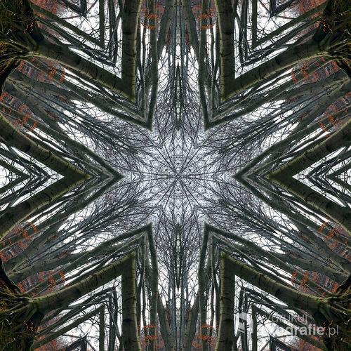 Abstrakcyjne spojrzenie na buczynowy jesienny las.