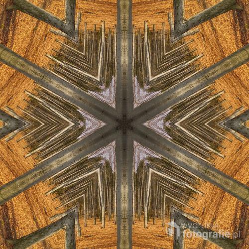 Abstrakcyjne spojrzenie na jesień w buczynowym lesie.