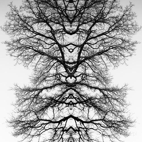 Kreatywne połączenie gałęzi drzewa w przykuwający uwagę totem.