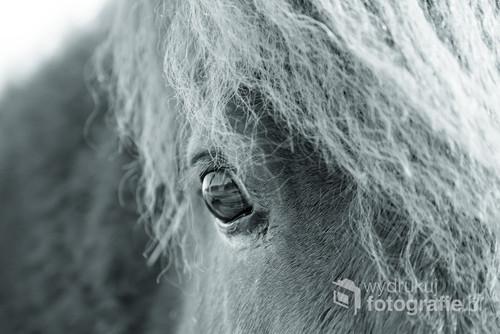 Fotografia końskiego oka.