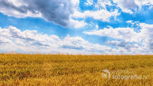 Piękny rolniczy krajobraz w słoneczny dzień.