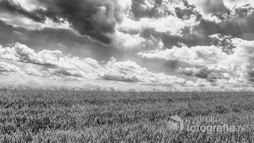 Piękny rolniczy krajobraz w tonacji czarno-białej