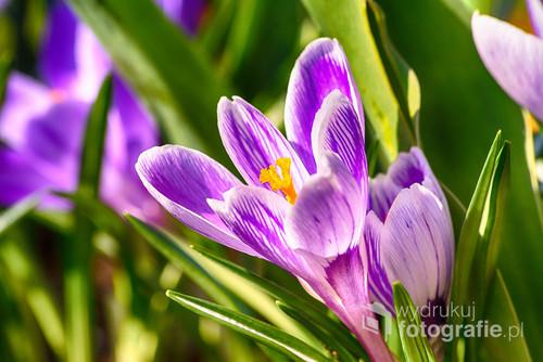 Fotografia wykonana w moim ogrodzie.