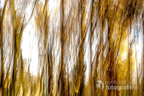 Drzewa w parku uwiecznione jesienną porą przy użyciu długiego czasu ekspozycji.