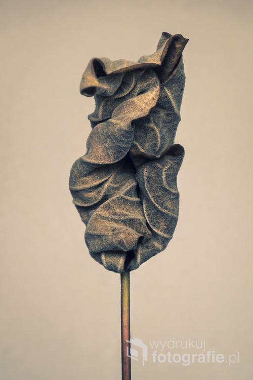 Fotografia cyfrowa. Jedna z trzech fotografii przedstawiających wyschnięty liść.