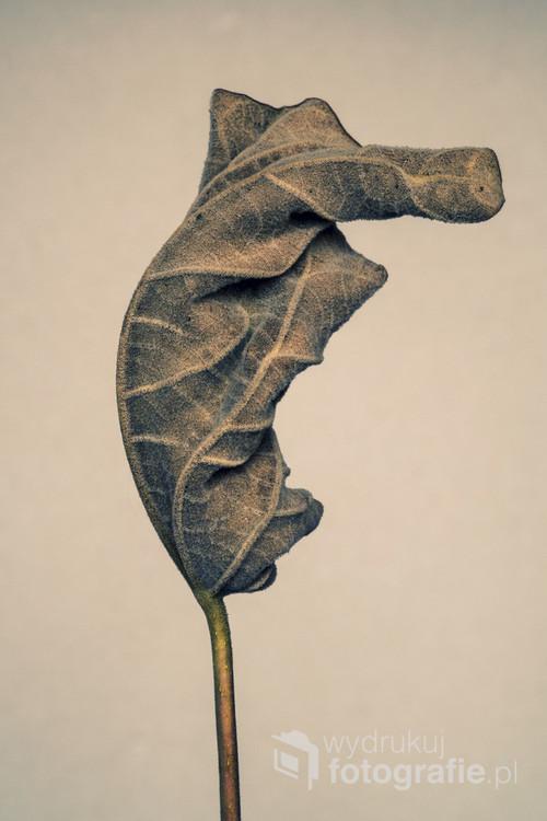 Fotografia cyfrowa. Druga z trzech fotografii przedstawiających wyschnięty liść.