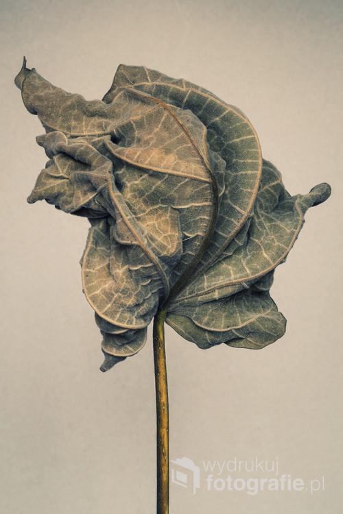 Fotografia cyfrowa. Trzecia z trzech fotografii przedstawiających wyschnięty liść.