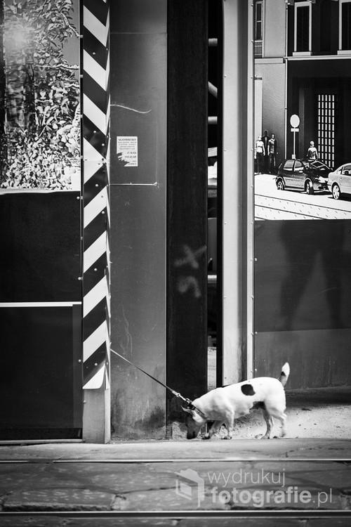 Fotografia uliczna, Mediolan 2014 r.