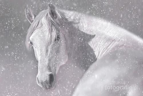 Zdjęcie znajduje się w kalendarzu wydanym przez    magazyn Foto Plus (