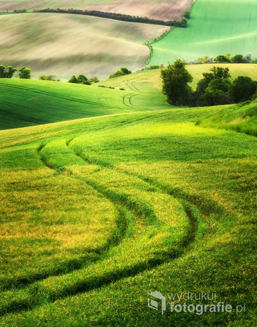 Morawskie pola ciągną się kilometrami. Zdjęcie zostało wykonane wiosną, w maju 2018 roku.