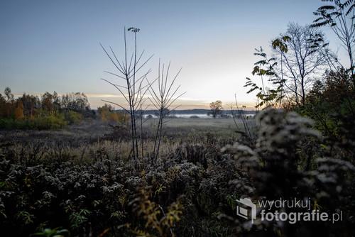 Tereny Kampinowskiego Parku Narodowego. Fotografia wykonana późną jesienią.