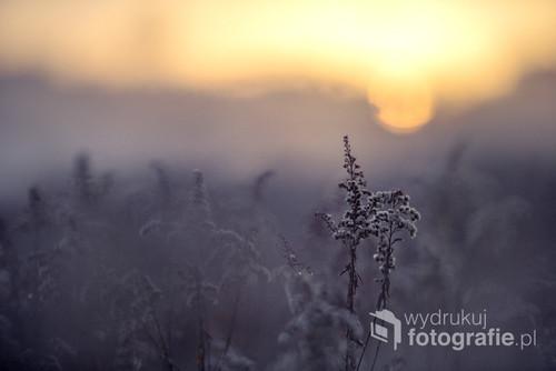 Zimowy, mroźny poranek