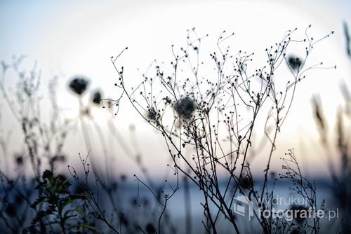 Fotografia wykonana tuż po zachodzie słońca. Dzikie tereny Biebrzy,
