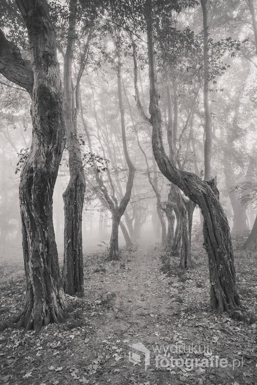 Spacer w starym parku z XVIII wieku w mglisty listopadowy poranek.