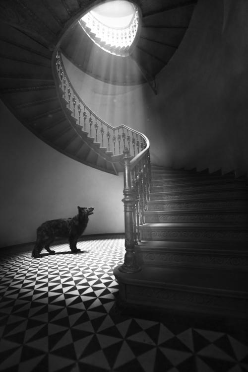 Owczarek niemiecki oczekujący swojego właściciela na zabytkowej klatce schodowej.