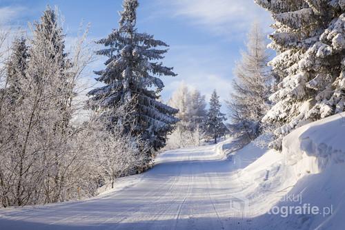 Wczesny, zimowy poranek  gdzieś na terenie Polski