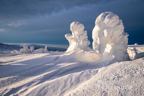 Styczniowy poranek na Szrenicy miał bardzo dynamiczną pogodę. Wiał silny wiatr i po niebie pędziły ciężkie,  śnieżne chmury, czasami słońce znalazło sobie prześwit i dodawało uroku ubranym w majestatyczne, śniegowe szaty rachitycznym choinkom.
