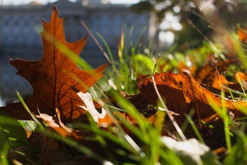 Spacerując sobie jesienią w Parku Łazienkowskim przysiadłem sobie na brzegu stawu w okolicy Pałacu na Wodzie. Rozmyślając zauważyłem jak liść pięknie pozuje do zdjęcia