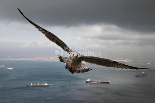 Gibraltar 2011
