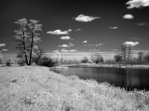 Mazowsze, okolice Broku, starorzecze (dawne koryto Bugu)  - zdjęcie wykonane w świetle podczerwonym.