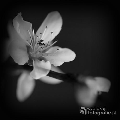 Zafascynowana urokiem kwitnących jabłoni postanowiłam przedstawić je w niekonwencjonalny sposób...