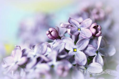 Kwiat wiosny