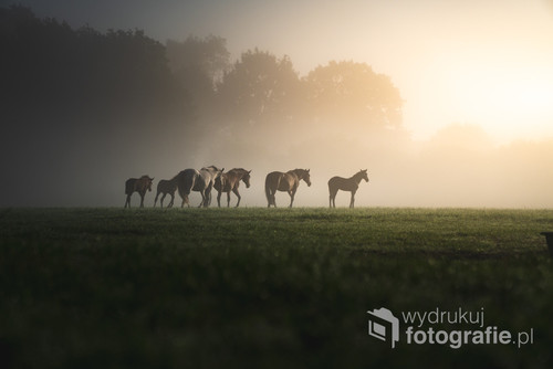 Fotografia wykonana podczas mglistego wschodu słońca w niemieckiej wiosce w Szlezwiku-Holsztynie
