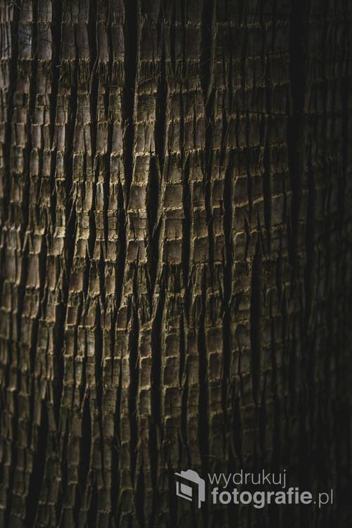 Zdjęcie makro struktury kory drzewa palmowego