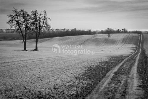 Krajnik Górny, pola, zachodniopomorskie, zima 2012