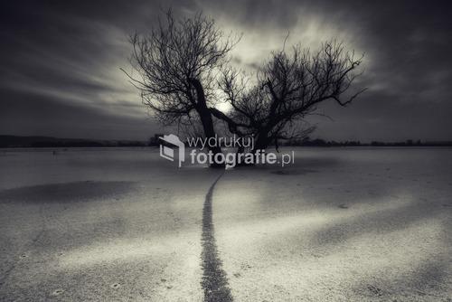 Park Narodowy Doliny Dolnej Odry, Niemcy, Zima 2011