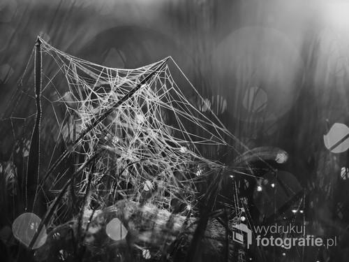 Obraz przedstawia pajęczą sieć pokrytą kropelkami porannej rosy.