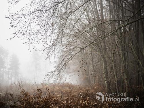 Las w okolicy Gdyni w jesiennej odsłonie.
